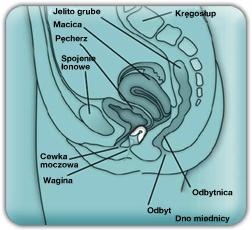 uterus_legende_pl2